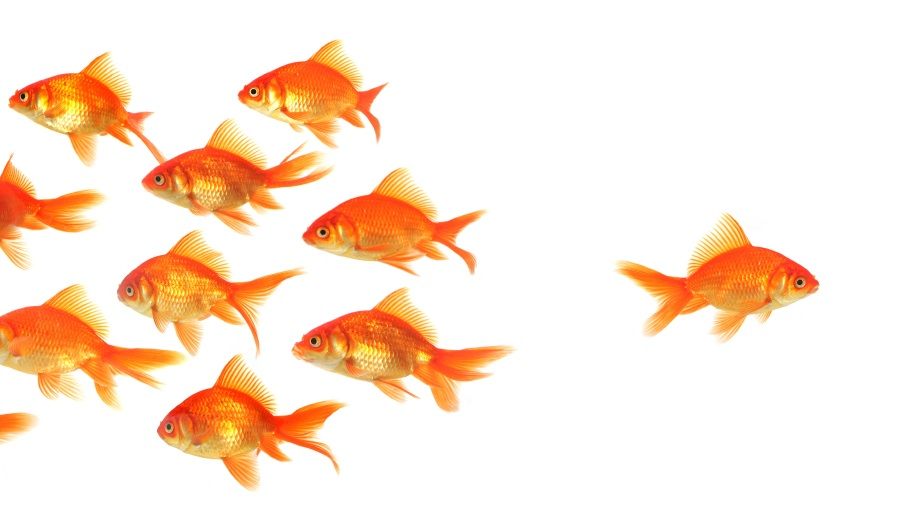 Welcome to interactive post day or more advise from the for Plural of fish