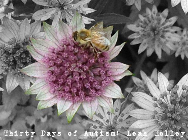 Beeimage.jpg